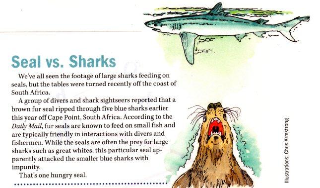 Seals vs Sharks002