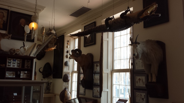 Joseph Steward Museum of Curiosities